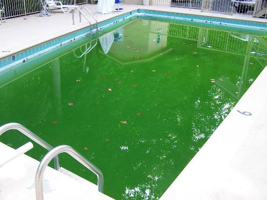 Green Algae Swimming Pools : Algae eliminator