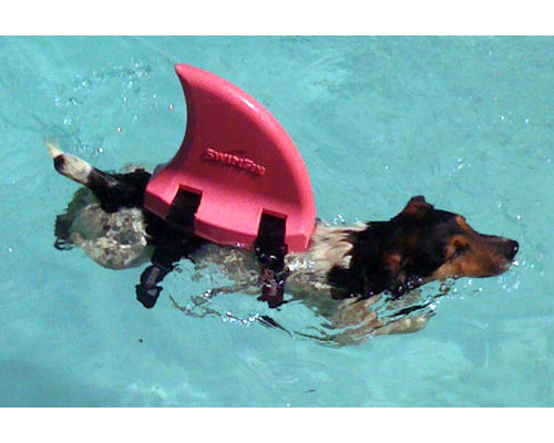 Doggie swim fin