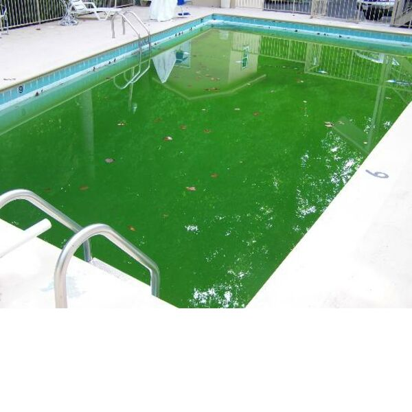 How to get green pool water clear